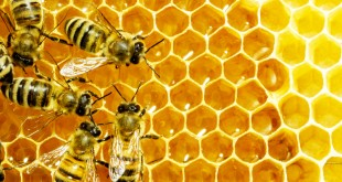 2014-11-19-bees