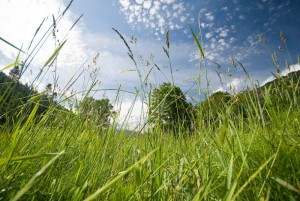 grass-fields-madison-falls-4085